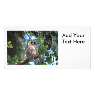 Wild Hoot Owl Staring in the Forest Picture Card