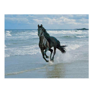 Wild Horse Dreams Postcard