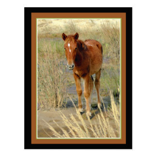 Wild Horse Foal Standing Postcard