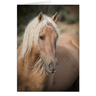 Wild Horse Greeting Card- Corona's Summer Portrait Card