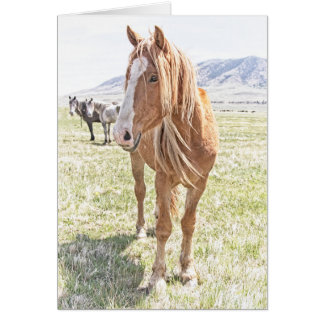 Wild Horse Mustang Greeting Card (blank inside)