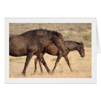 WILD HORSE OF THE ONAQUI MOUNTAINS, UTAH CARD