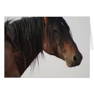 WILD HORSE OF UTAH ONAQUI HERD BLANK NOTECARD