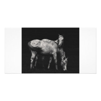 wild horse custom photo card