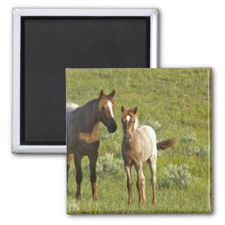 Wild Horses at Theodore Roosevelt National Magnet