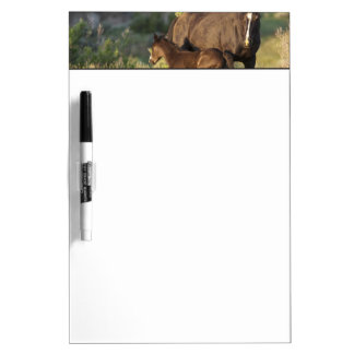 Wild Horses at Theodore Roosevelt National Park Dry Erase Board