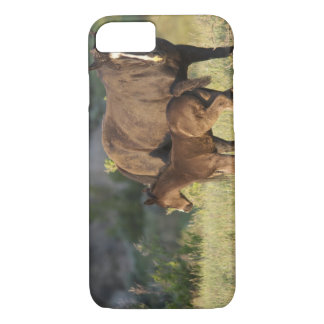 Wild Horses at Theodore Roosevelt National Park iPhone 8/7 Case