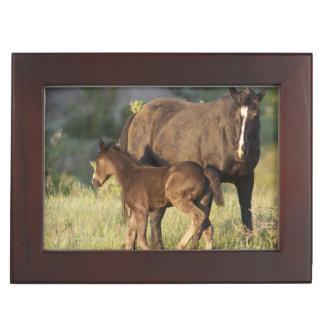Wild Horses at Theodore Roosevelt National Park Keepsake Box