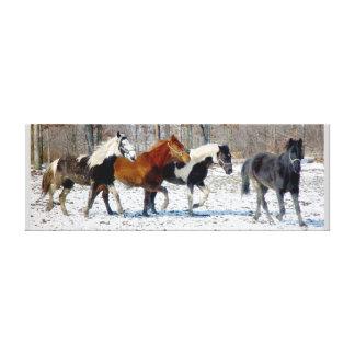 Wild Horses Canvas