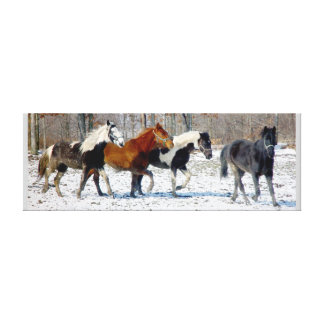 Wild Horses Canvas Canvas Print
