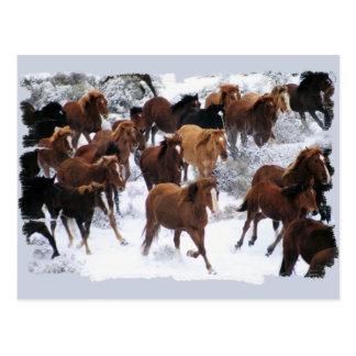 Wild Horses Driven Postcard