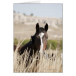 Wild horses in South Dakota Greeting Cards