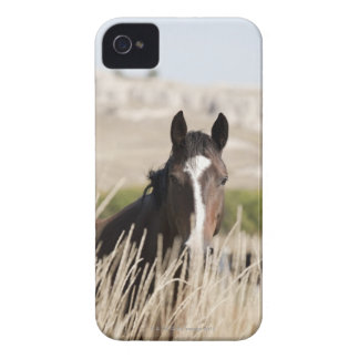 Wild horses in South Dakota iPhone 4 Cover