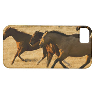 Wild horses iPhone 5 case