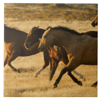 Wild horses large square tile