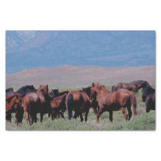 Wild Horses Out West Tissue Paper