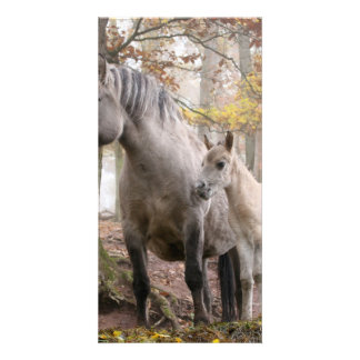 Wild Horses Personalized Photo Card
