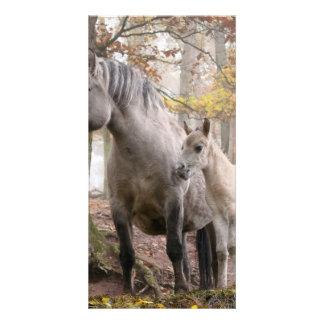 Wild Horses Photo Cards