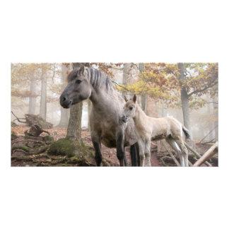 Wild Horses Custom Photo Card