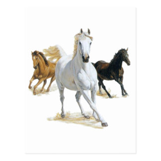 wild horses post card