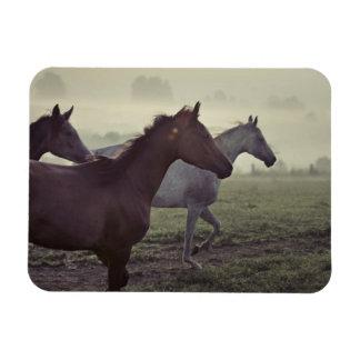 Wild horses rectangular photo magnet