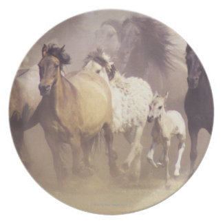 Wild horses running plate