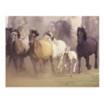 Wild horses running post card