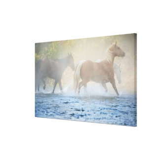 Wild horses running through water canvas print