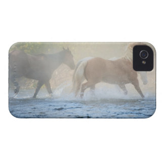 Wild horses running through water iPhone 4 Case-Mate case