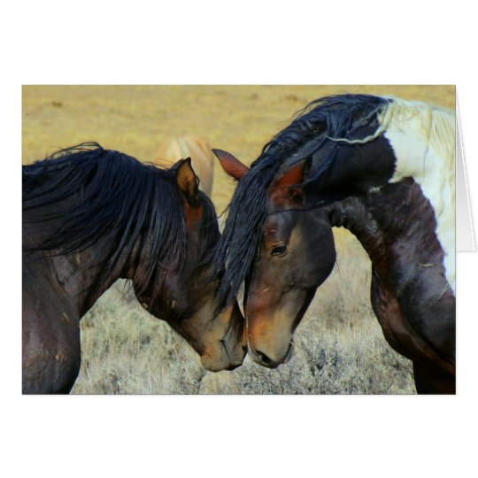Wild Horses Touching Noses Blank Card