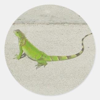 Wild Iguana Classic Round Sticker