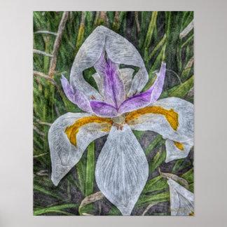 Wild Iris 11x14 Canvas Poster Print