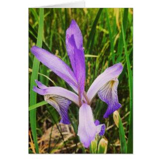 Wild Iris in the Brazos, New Mexico Greeting Card