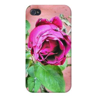 Wild Irish Rose Phone Case Cases For iPhone 4