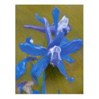 Wild Larkspur Colored Pencil Drawing Post Card