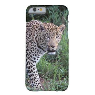 Wild leopard iPhone6 case