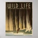 Wild Life Vintage 1940 National Park Service Poster