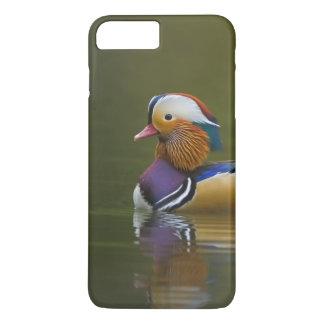 Wild Mandarin Duck Aix galericulata) on dark iPhone 8 Plus/7 Plus Case