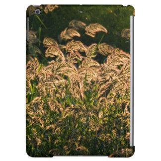 Wild Millet (Panicum Sp.) Growing In Wetland