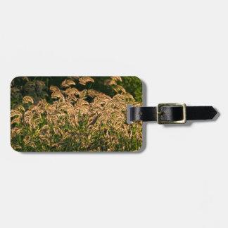 Wild Millet (Panicum Sp.) Growing In Wetland Bag Tag