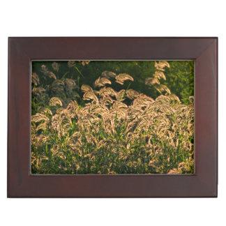 Wild Millet (Panicum Sp.) Growing In Wetland Keepsake Box
