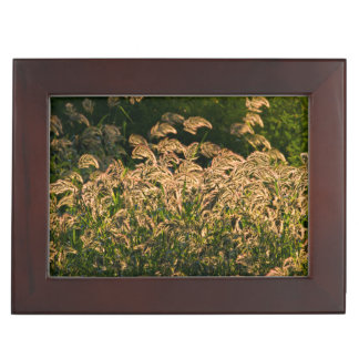Wild Millet (Panicum Sp.) Growing In Wetland Keepsake Boxes