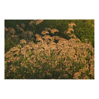 Wild Millet (Panicum Sp.) Growing In Wetland Wood Wall Decor
