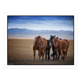 Wild Mongolian horse, Gobi Desert Postcards