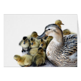 Wild Mother Duck and Ducklings Card
