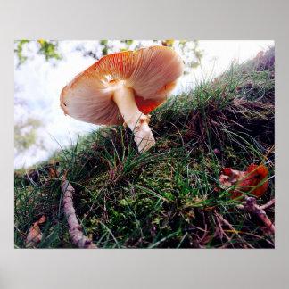 Wild mushroom / toadstool colour poster
