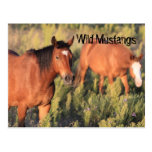 Wild Mustang Horses Postcard