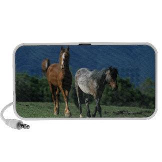 Wild Mustang Horses iPod Speakers