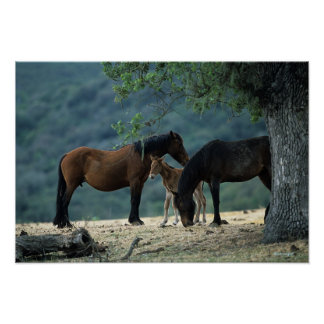 Wild Mustang Mare & Foal Poster
