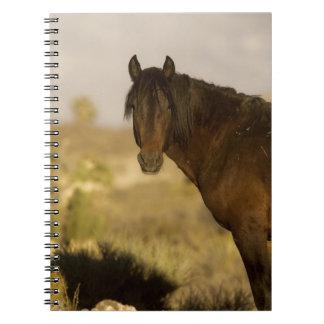 Wild Mustang stallion, Wheeler Peak herd, Cold Spiral Notebook